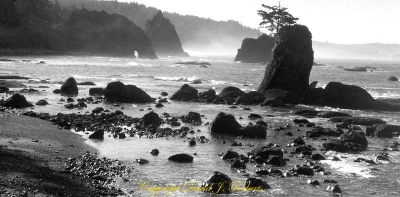 Scene on the Washington Coast north of Rialto Beach, Olympic National Park