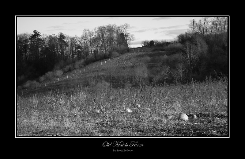 Old Maids Farm, South Glastonbury, CT