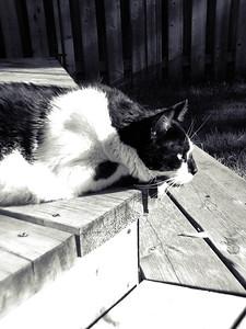 Sitting In the Morning Sun