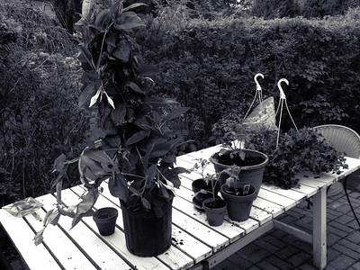 Waiting for the Gardener