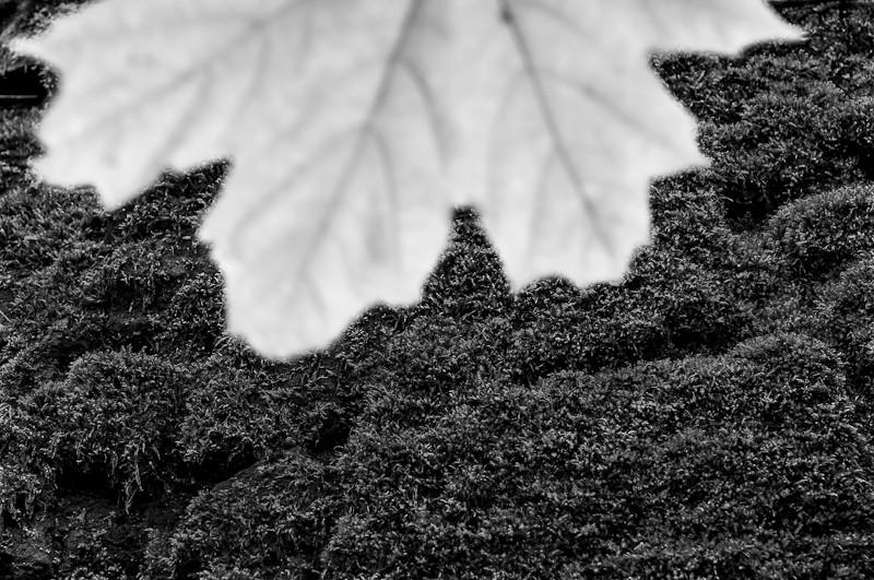 Leaf_ER_5_11_12.jpg