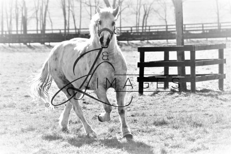 Equine Photography