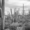 Organ Pipe Cactus National Monument<br /> 2017