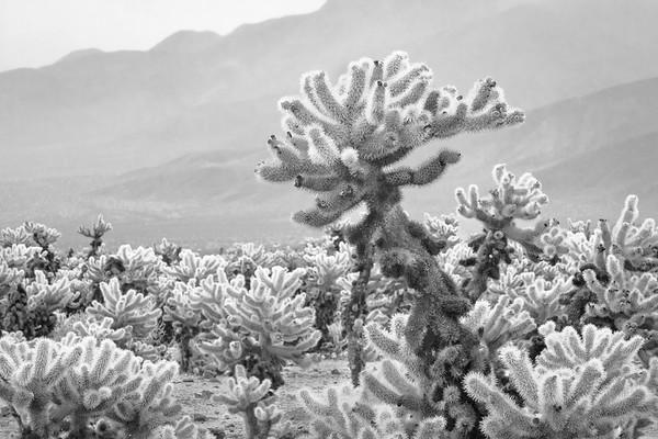 Joshua Tree National Park<br /> 2017