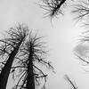 Burned forest<br /> 2016