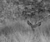"""""""Fort Davis Deer Blind""""<br /> NFS"""