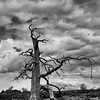 Lonely Tree<br /> Craters of the Moon National Monument<br /> Idaho