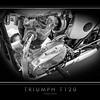 Triumph T120 (3)