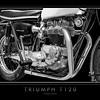Triumph T120 (1)