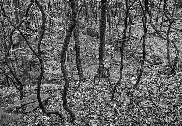 laurel Ridge_33_6_12_09.jpg