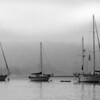 Boats in Morro Bay fog