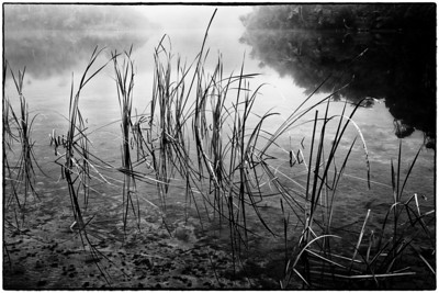 The Dead Marshes Golden Bay New Zealand