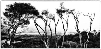 The Midgewater Marshes Golden Bay New Zealand