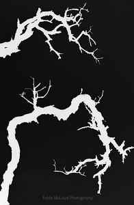 Tendrils of white and black