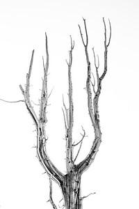 Botanical Cross Section