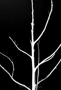 Study in Black & White - No 11