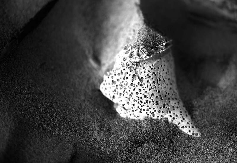 seashell in the sand, Seabrook Island, South Carolina