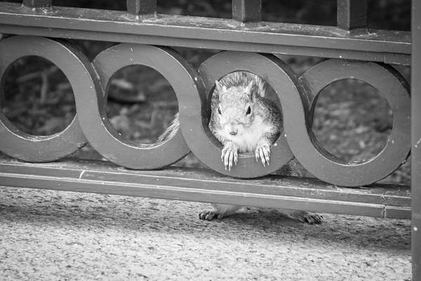 DC Squirrel