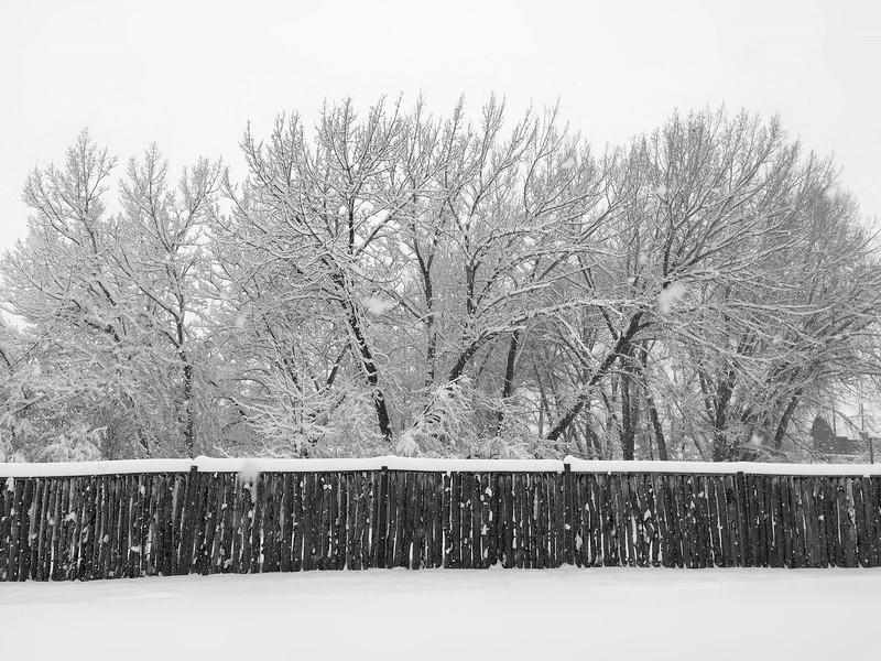 Sierra's Fence