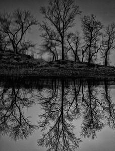 Tree mystery