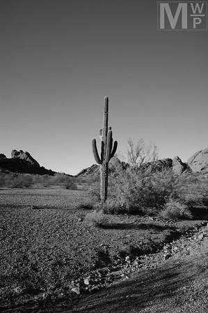 Stop, Saguaro Time