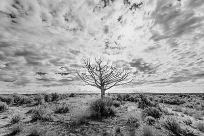 Lone Tree, Monticello, Utah