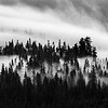 Black and White Rolling Fog