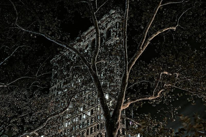 Flatiron Building at Night with Lightpainted Tree
