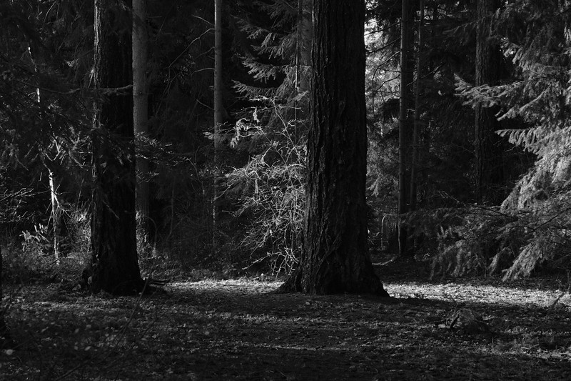 Forest in the city | Lincoln Park | Seattle, WA | January 2018