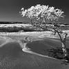 Costa Rican Beach Tree