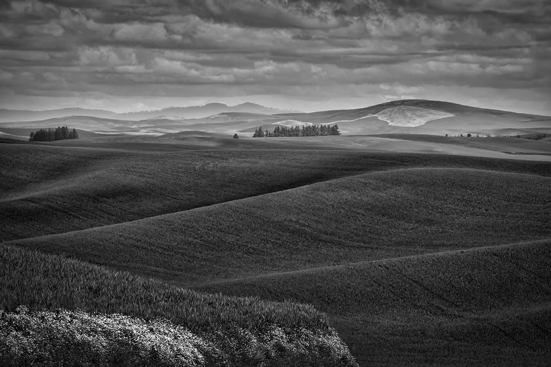 Rolling green fields and dramatic clouds in Palouse area of Eastern Washington, Washington State