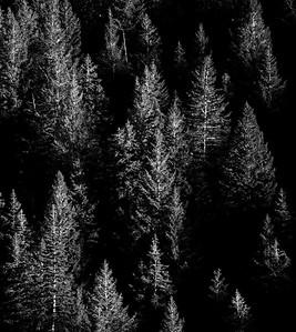 Pines, Utah