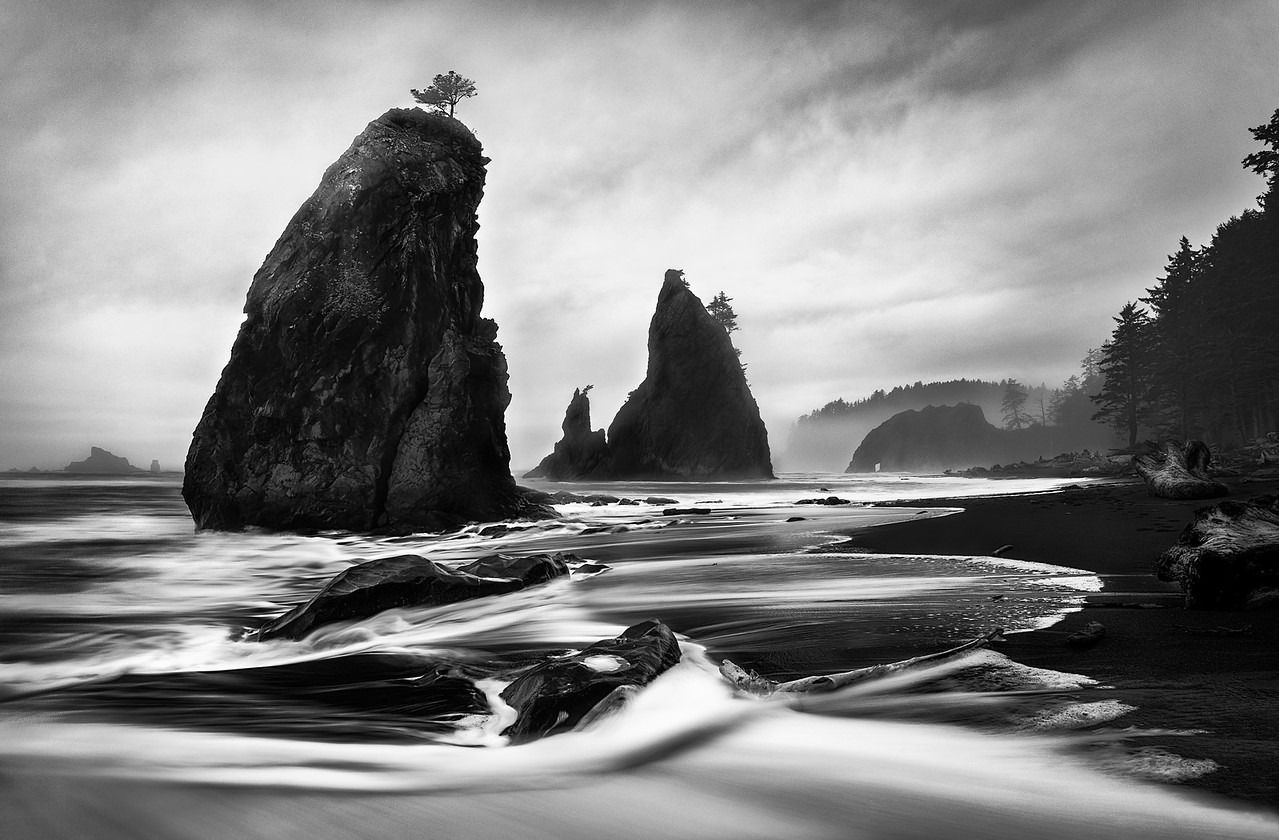 Giants of Rialto Beach