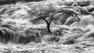 "Survival ""The Faye Tree"""