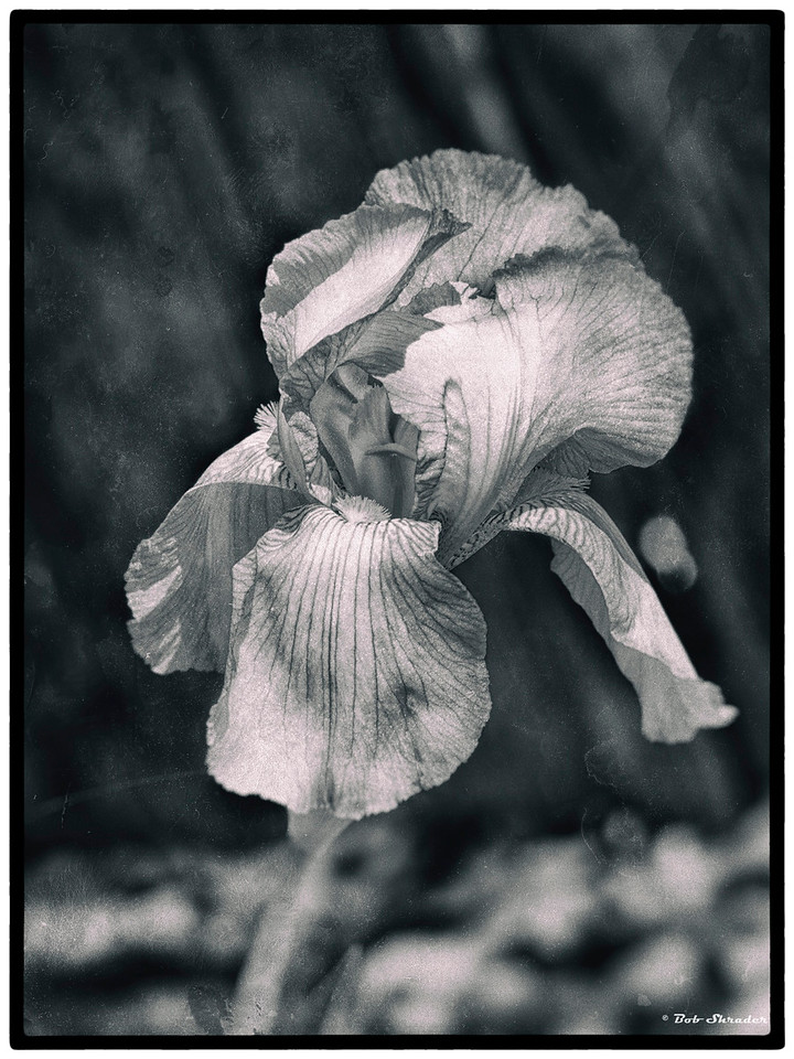 Iris Old Film Look