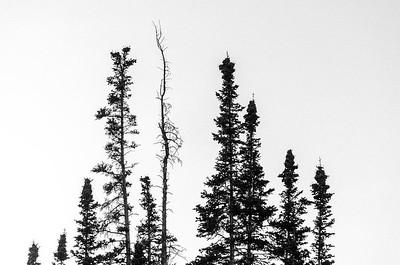 Lone Trees, Utah