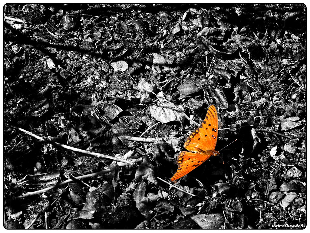 Butterfly on Ground