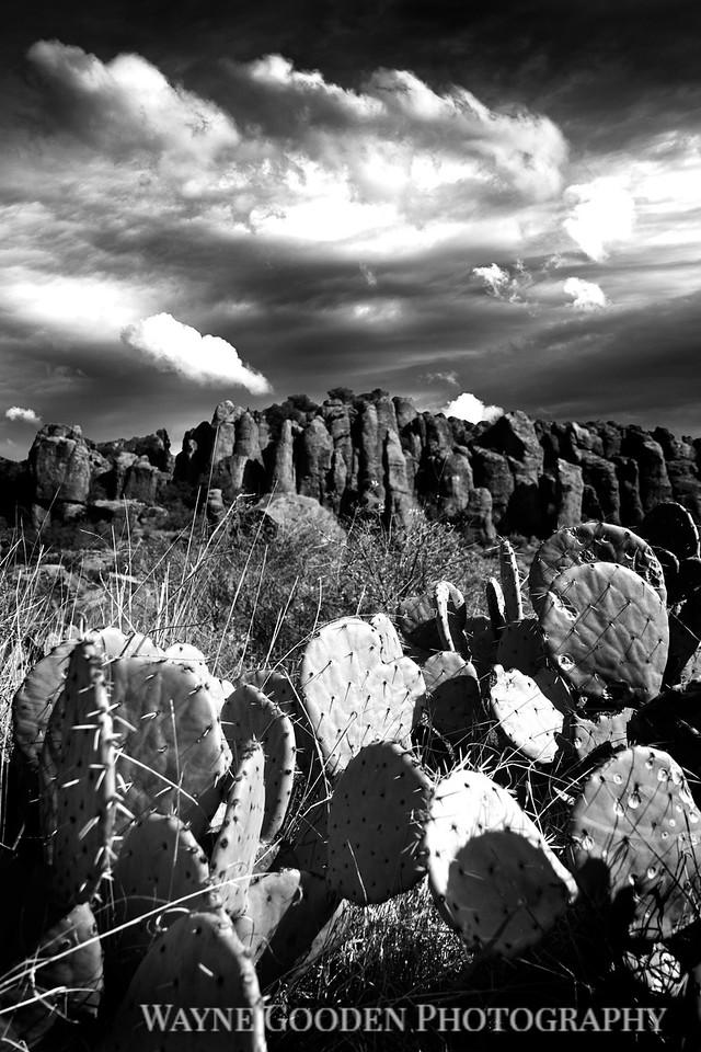 Ft. Davis Mountain Cactus
