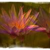 La Fleur Blended