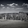 Elephants taking a selfie in Amboseli National Park, Kenya, East Africa