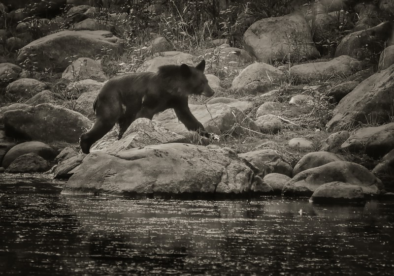 After Bath Bear