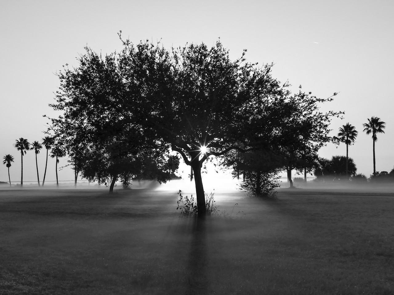 TreeofLife8116-BW