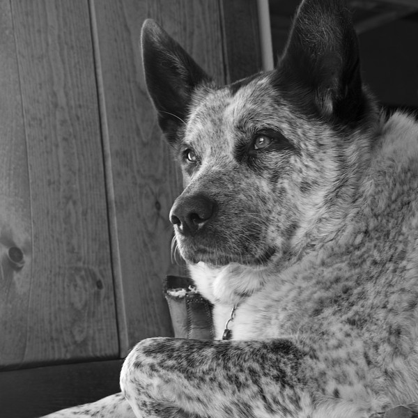 Mabel, Thinking