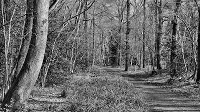 Woodland Scene in Spring