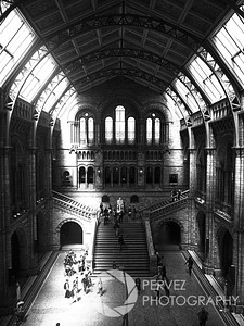 Rare beams of sunlight at the Natural History Museum in London. I was walking from the Prince Albert Memorial to the Underground, but needed to take a quick bathroom break. The Natural History Museum was en route, so I decided to pop in quickly, use the facilities, take a quick look around, and head out (this was my last day in London and I was trying to see a ton of things, hence the rush). I was looking for the exit when I walked into this opening in the museum. I saw the beams of light coming through and started sprinting up the stairs to make sure I got this photo (as anyone who visits London knows, sunlight is rare!). I probably terrified the group of school children as I ran by them while pulling my camera out of its case and putting the right lens on. Fortunately, when I got up to the top, the light was still coming through. It reminded me of a famous B&W shot of a light beam coming through at old Penn Station in New York City. The architecture in this building is also quite spectacular, so that added to the allure of the photo. Needless to say, best bathroom break ever!