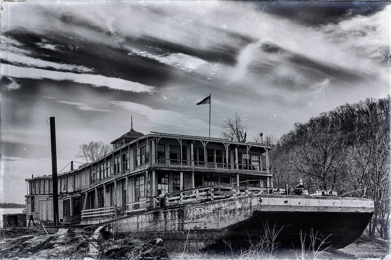 Goldenrod Showboat in Black and White