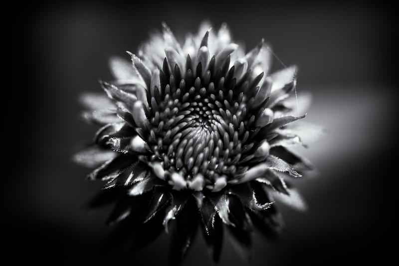 Flowered Sun