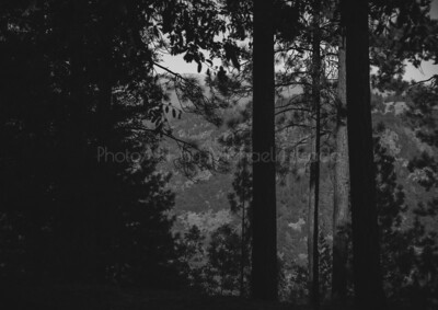 Into the Dark Forest
