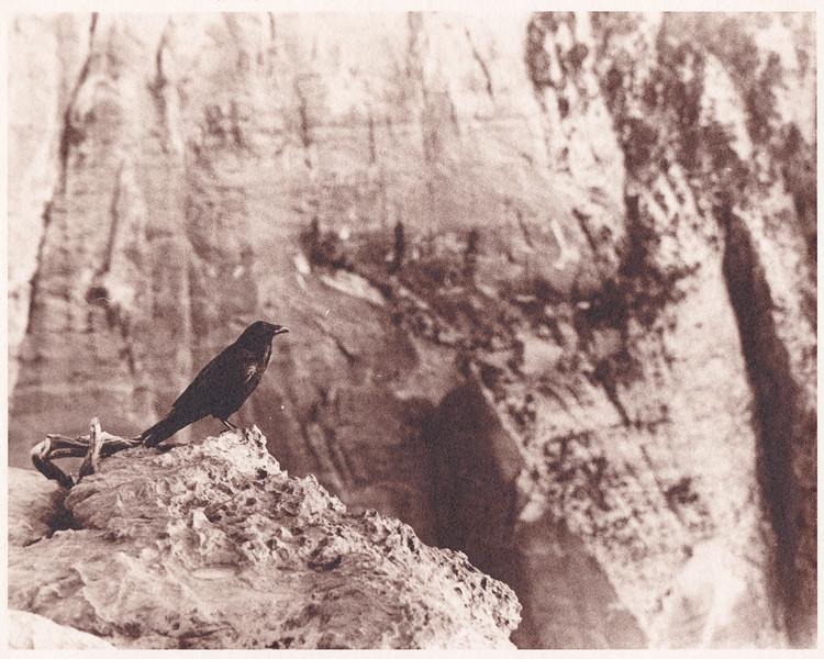 The Raven (Sepia)