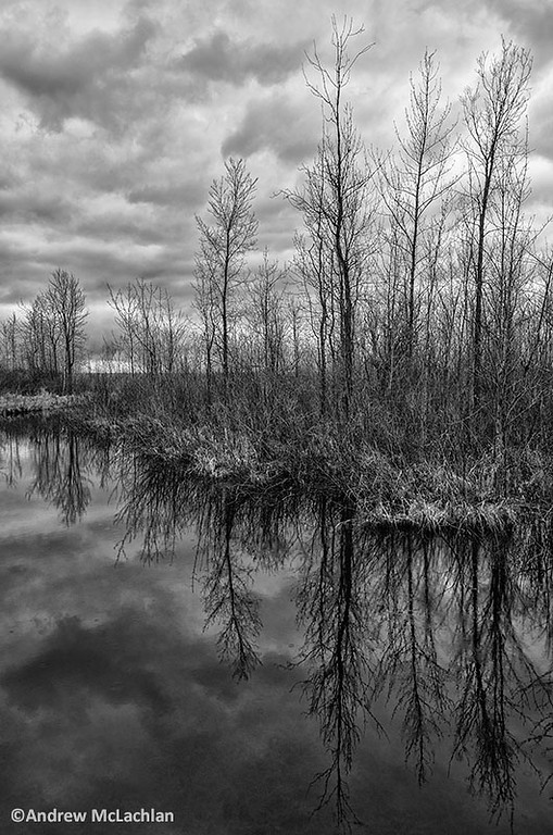 Tiny Marsh in Spring. Elmvale, Ontario.